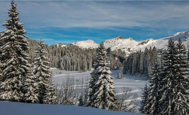 alberi panorama neve cielo sole