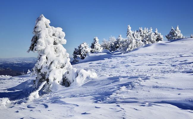 freddo neve ghiaccio albero panorama