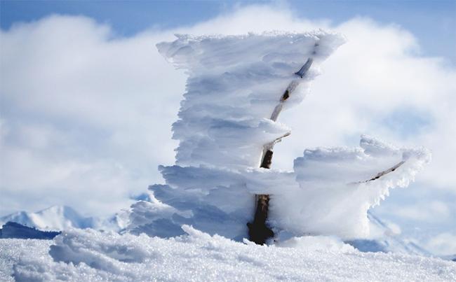 ghiaccio vento ramo
