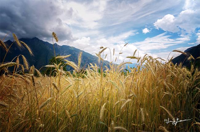 grano montagne cielo framarini