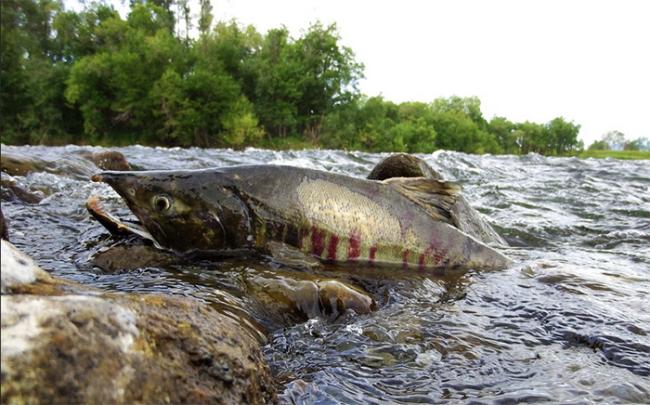 pesce fiume sasso bocca