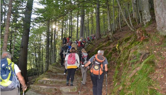 sentiero macugnaga bosco salita gruppo